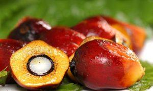 manfaat minyak kelapa sawit