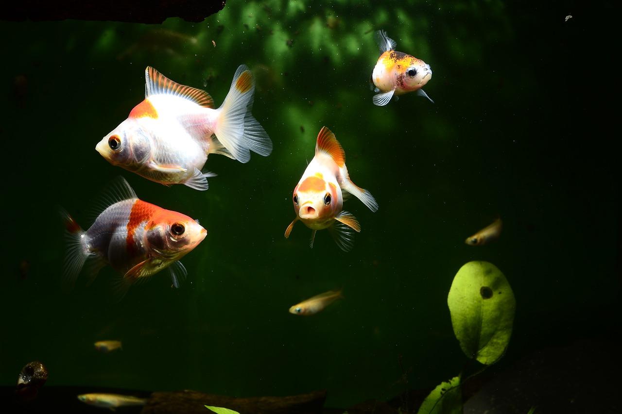 aquarium mini agroindustri.id